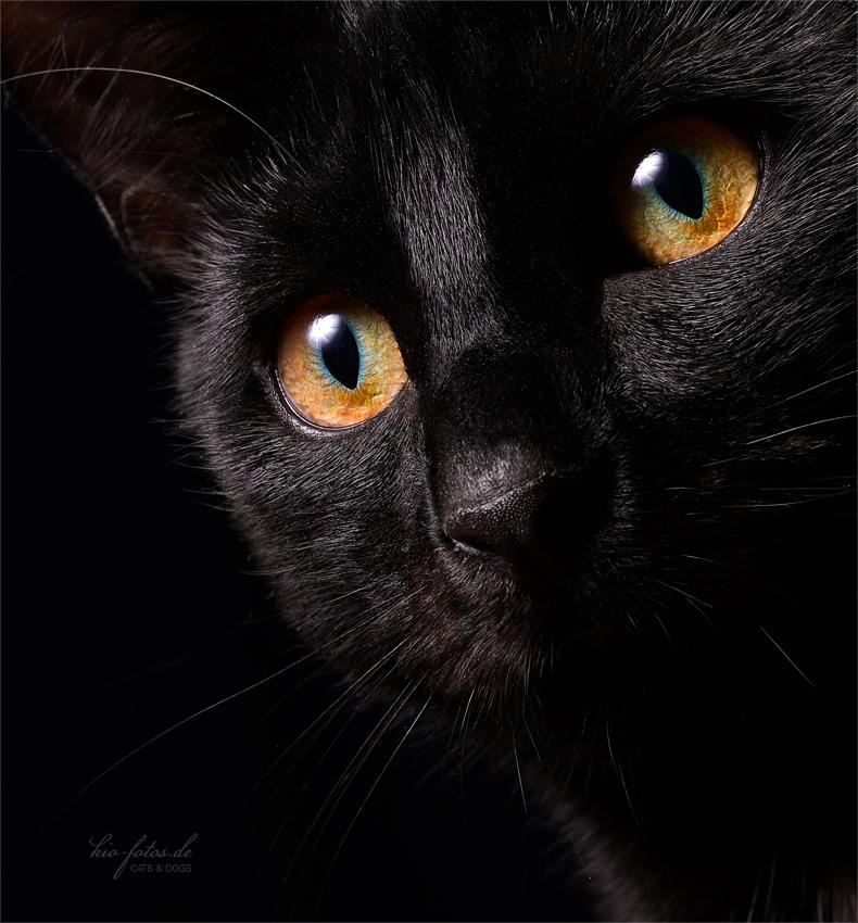 Kitty***