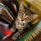 Kitty book worm