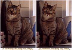 Kitty Cat 3D