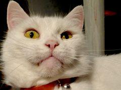 Kitty Miss Bianca
