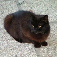 Kitty Nirtak