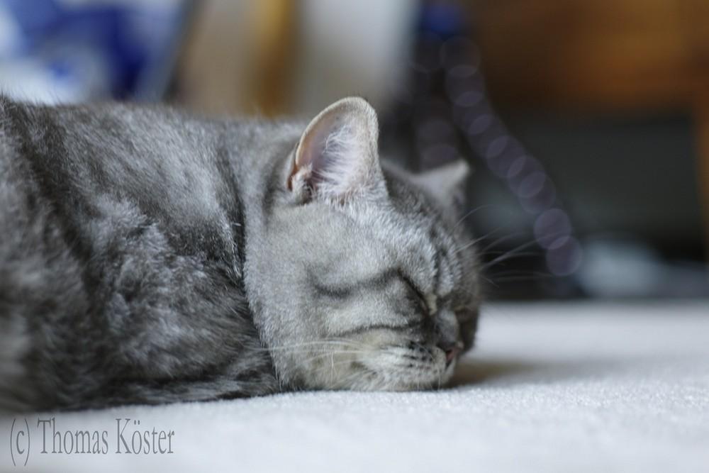 Kitty schläft