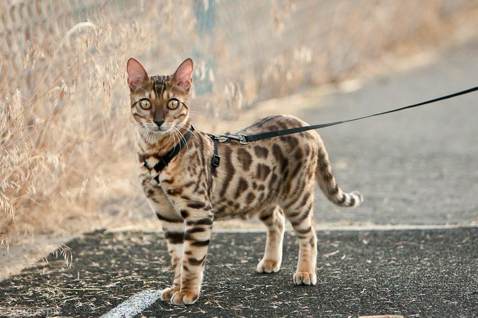 Kitty taking a stroll on sport field.