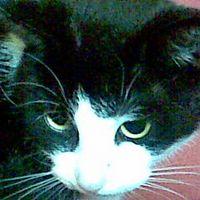 Kittylady