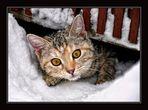 Kitty´s erster Schnee