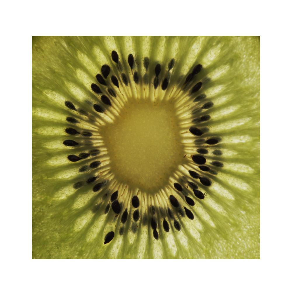 [kiwi] © Simon Wieland