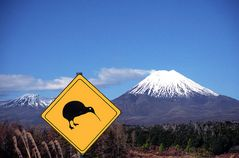 Kiwis Crossing