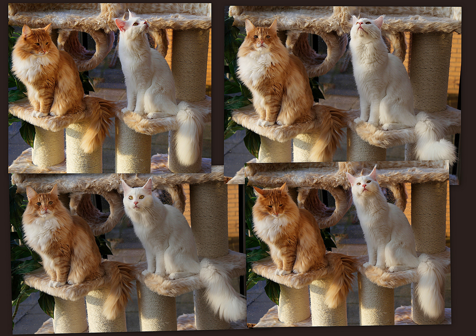 ***Kjelli & Morris***