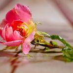 Kl. Rose 3