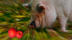 Klara träumt von roten Äpfeln