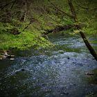 Klares Wasser und zart grüne Blätter über dem kleinen Bach