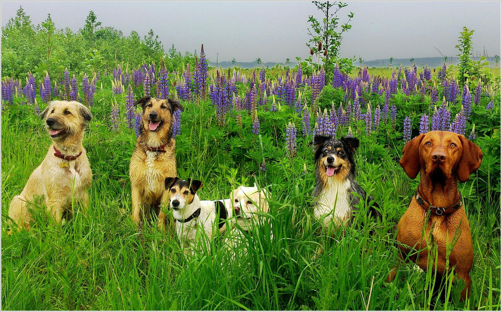 Klassenausflug der Hundeschule zu den Mittwochsblümchen