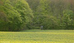 Klein aber fein , (m)ein Wunsch: Das Häuschen im grünen