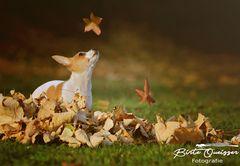 Klein Amy lernt den Herbst kennen