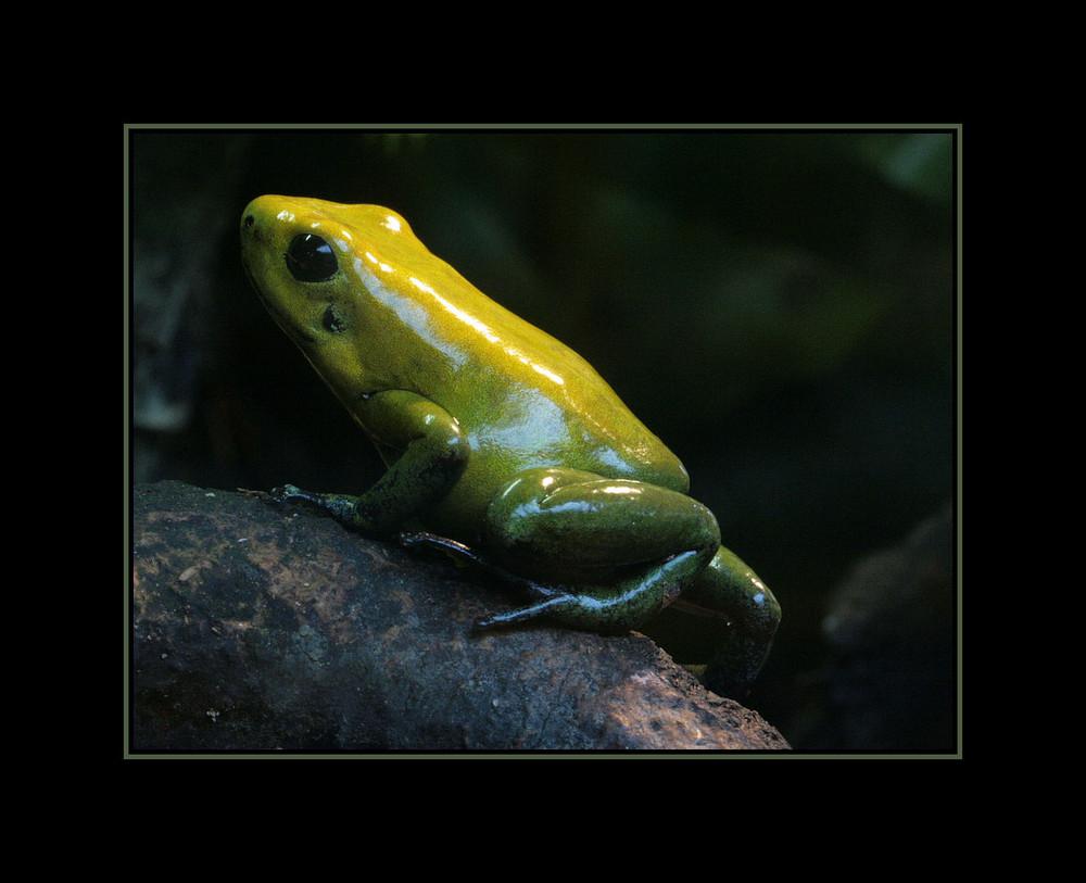 klein ,gelb, giftig