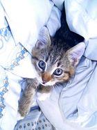 klein Schnurz im Bett