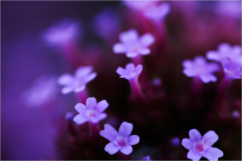 klein und lila