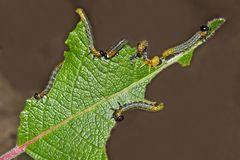 Kleine, aber unbeliebte Künstler.  - Une oeuvre artistique d'un insecte mal aimé...
