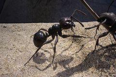 kleine Ameise mal ganz groß