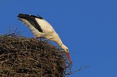 Kleine Ausbesserung am Nest
