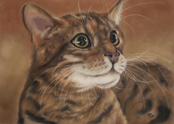 Kleine Bengal Katze