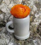 Kleine Bierblume