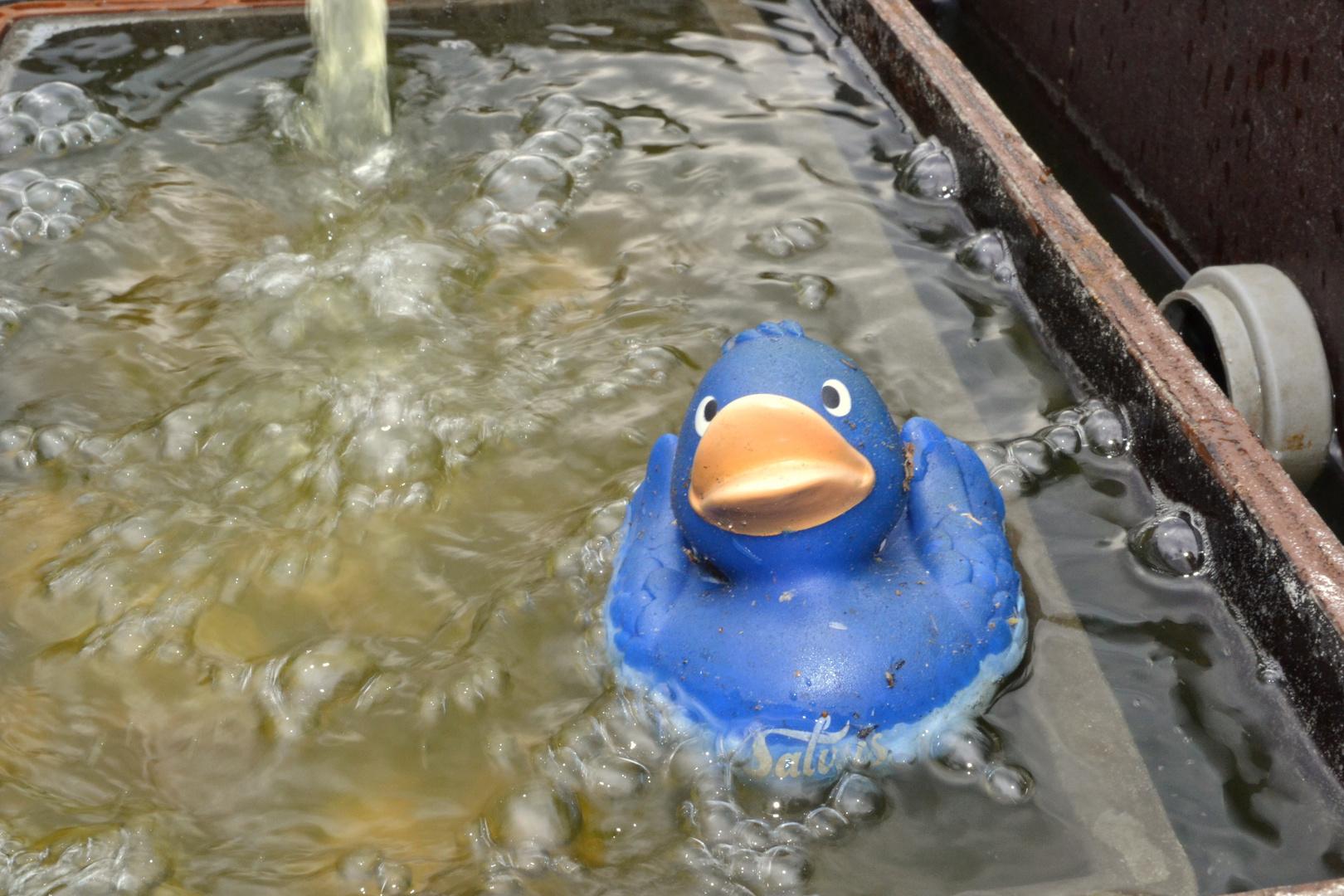 Kleine blaue Ente