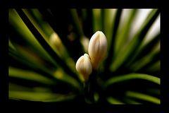 kleine Blüte....