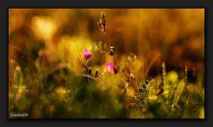 Kleine Blüte im Abendlicht
