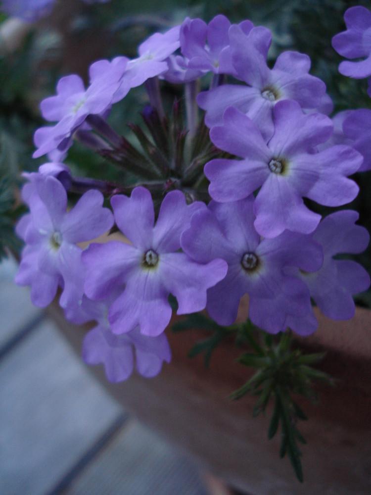 kleine Blüten.