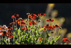 Kleine Blumen