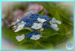 Kleine Blumen am Weg zum Miradouro Parque Lagoa do Canario