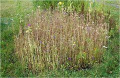 Kleine Blumenwiese