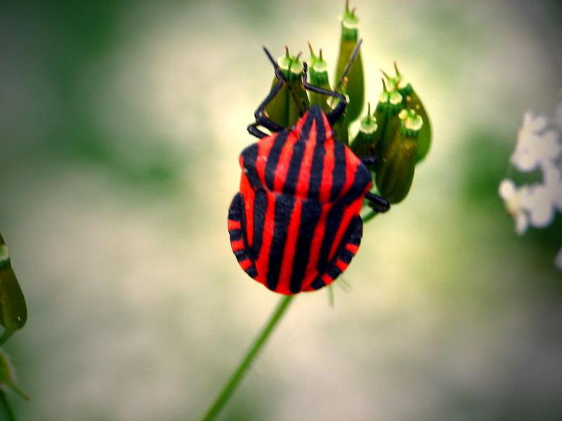 kleine Farbklekse der Natur