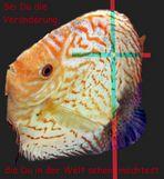 Kleine Fische werden gross.....