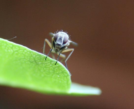kleine fliege 2