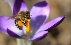 kleine Frühlingstage