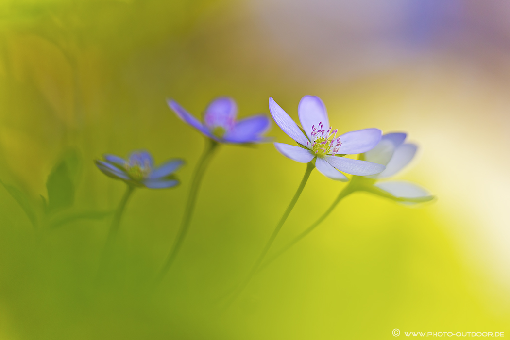 Kleine Frühlingsträumerei