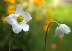 Kleine Gartenromantik