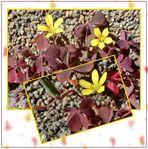Kleine gelbe Blüte als Minicollage