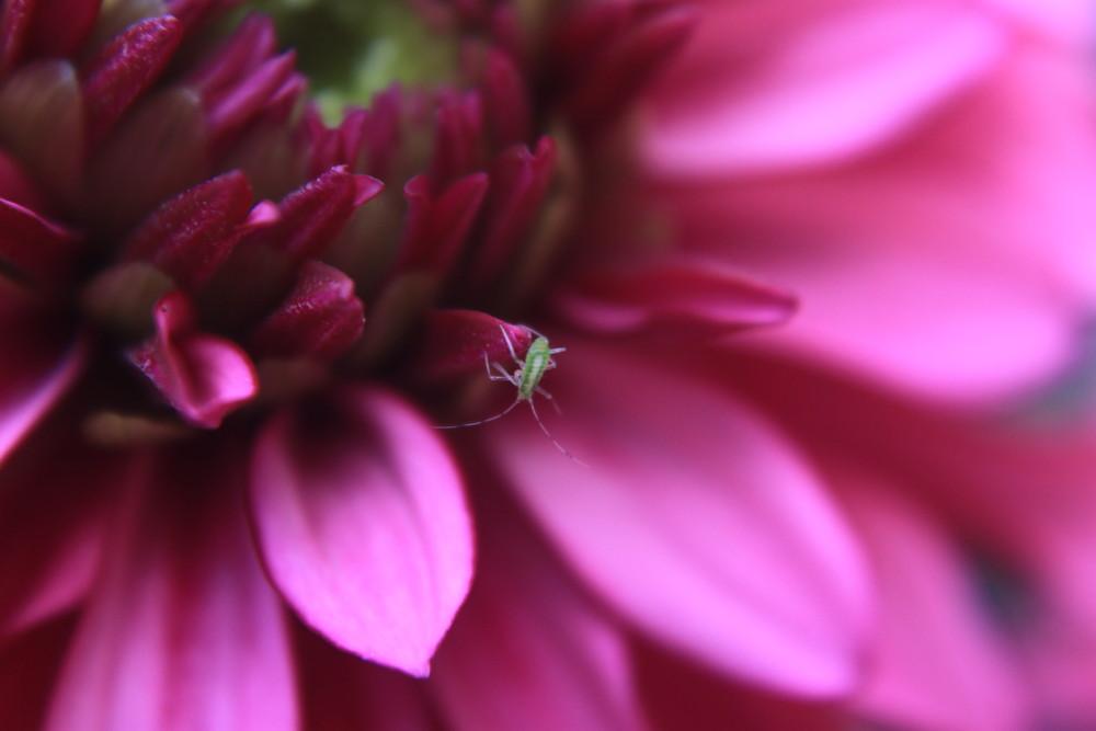 Kleine Grüne Mänchen...
