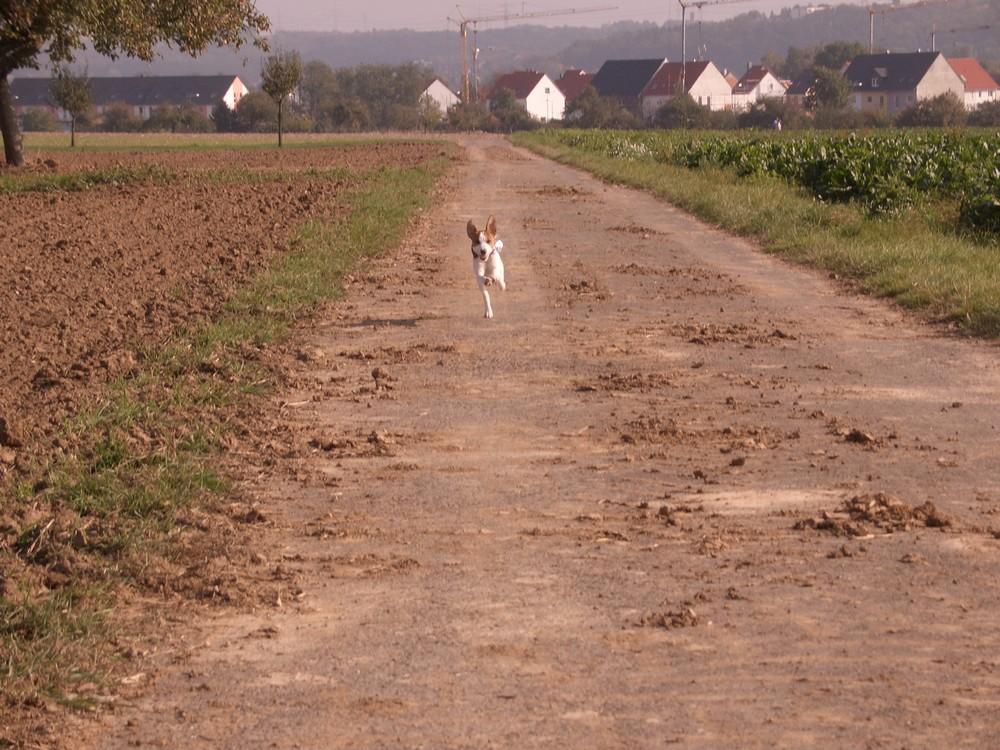 Kleine Hund ganz schnell