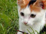 Kleine Katze auf grüner Wiese