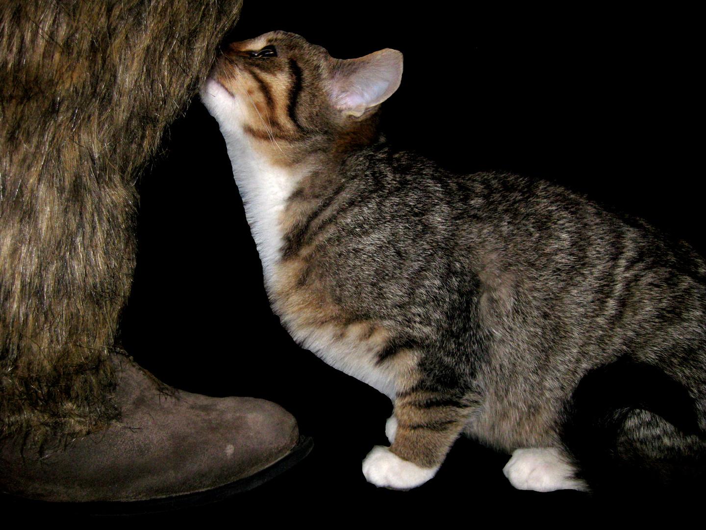 kleine katze trifft auf einen steinzeitmenschen foto bild tiere haustiere katzen bilder. Black Bedroom Furniture Sets. Home Design Ideas