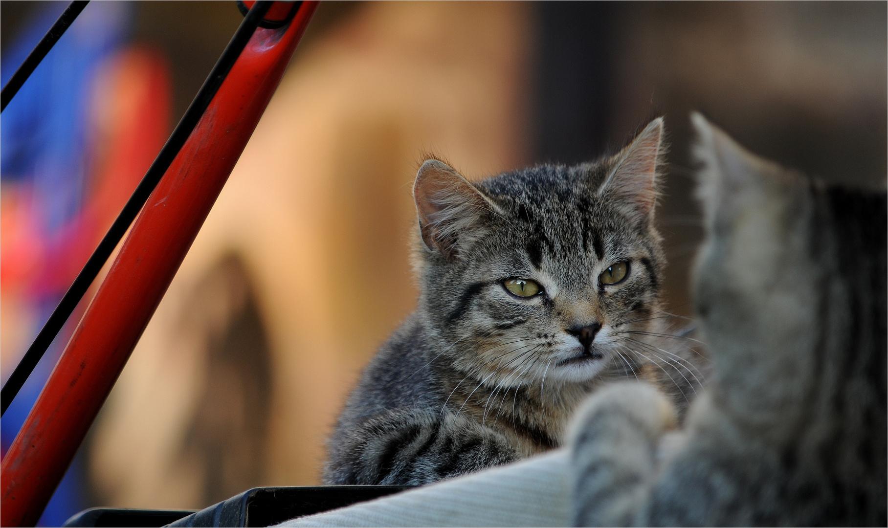 *Kleine Katzen-Diskussion*