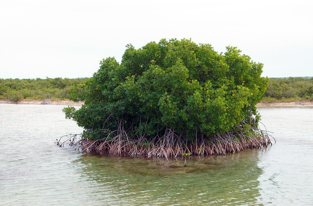 ..kleine Mangroveninsel..