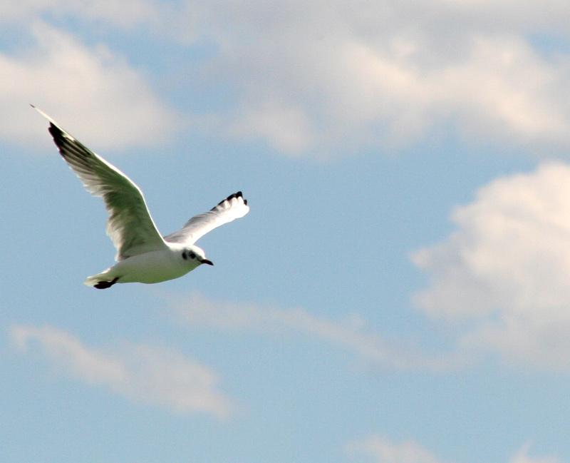 Kleine Möve, flieg nach Helgoland ...