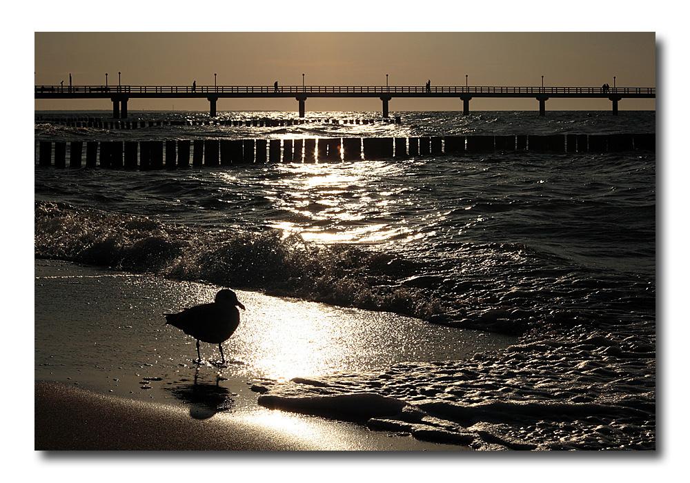 Kleine Möwe fast allein am Strand...
