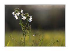 kleine Naturwelt (1)