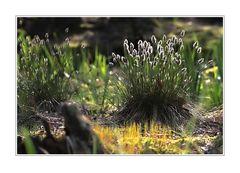 kleine Naturwelt (3)